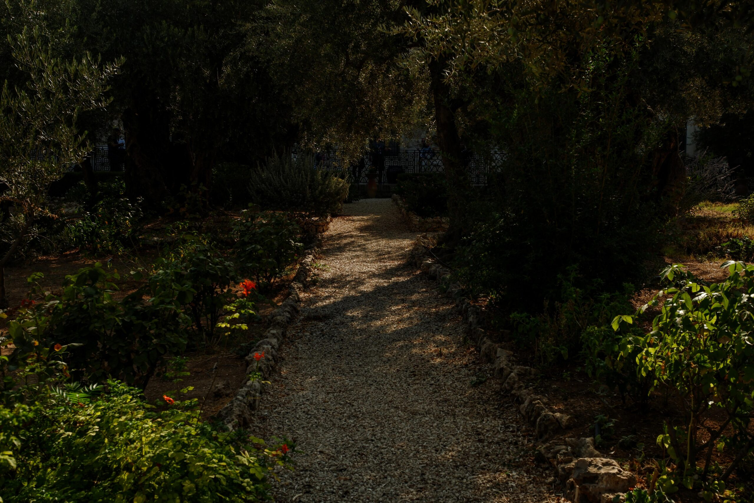 Photo of Garden of Gethsemane in Israel. The Long Walk